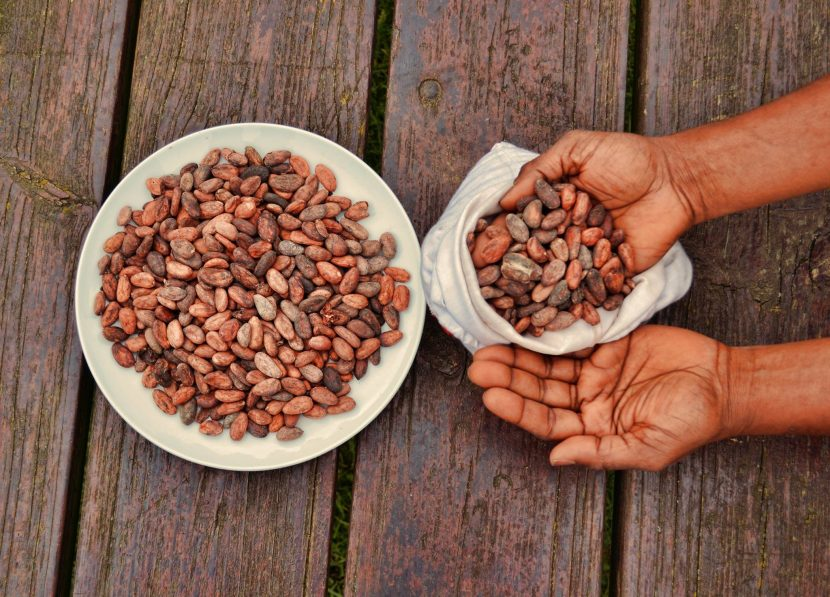 The legend of ghanaian cacao