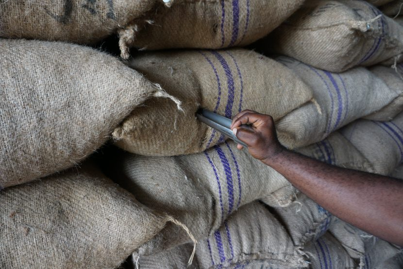 How does the cocoa market in Ghana work?