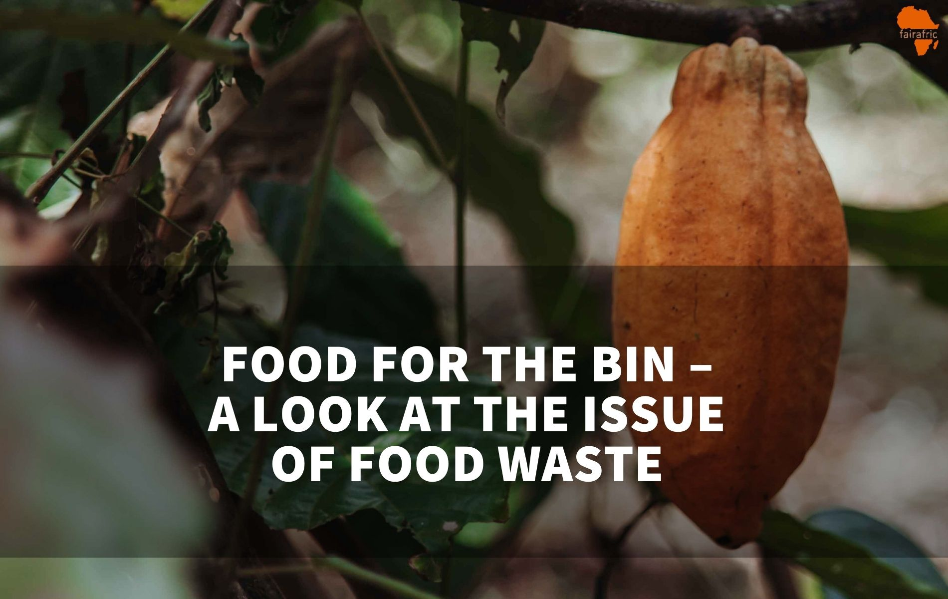 Food for the bin – A look at the issue of food waste